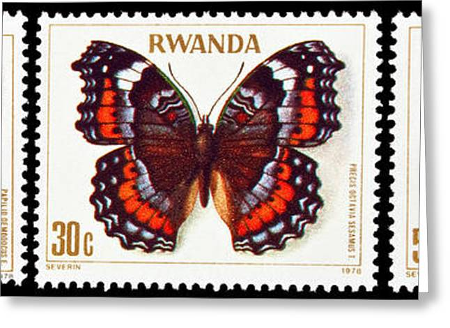 Collection Of Butterflies Stamps. Greeting Card by Fernando Barozza