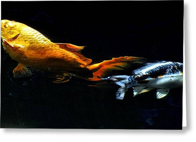 Colorful Koi Greeting Card by Don Mann