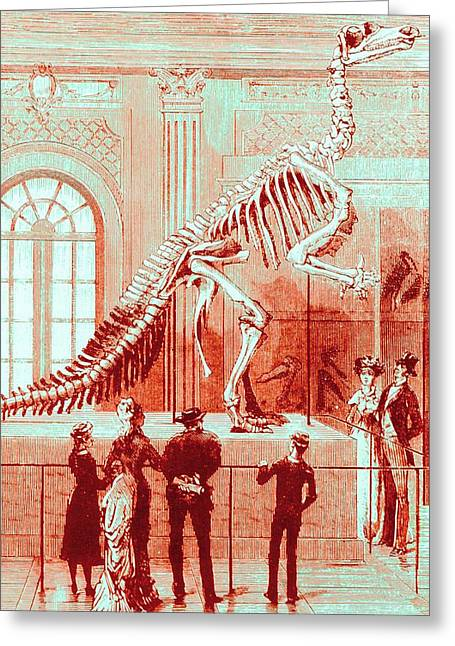 Coloured Engraving Of An Iguanodon Museum Exhibit Greeting Card by Mehau Kulyk