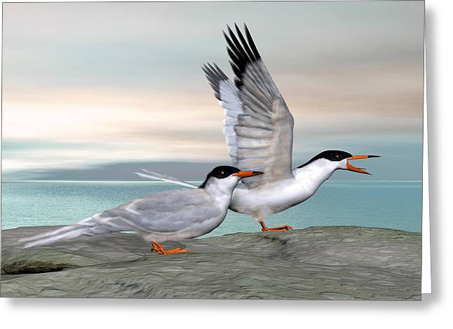 Common Tern Greeting Card by Walter Colvin