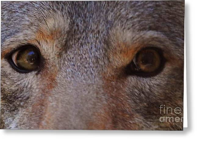 Coyote Eyes Greeting Card by DiDi Higginbotham