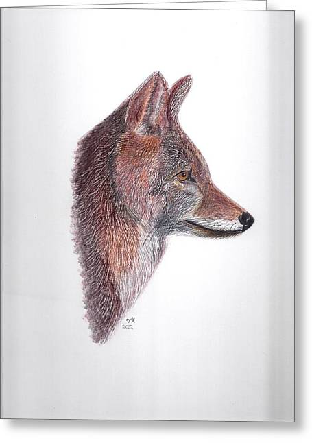 Coyote Greeting Card by Tony  Nelson