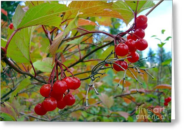 Greeting Card featuring the photograph Cranberries by Jim Sauchyn