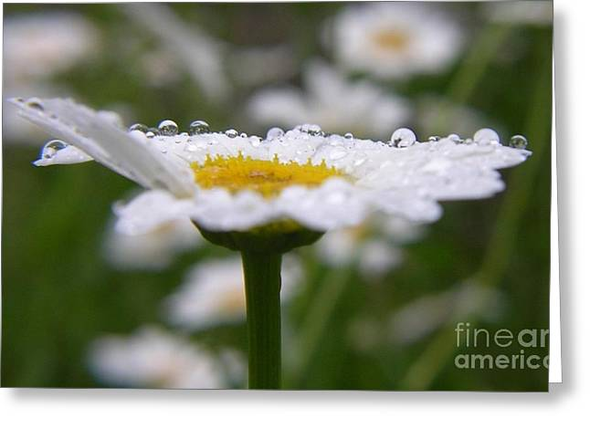 Greeting Card featuring the photograph Daisy In The Rain by Yumi Johnson