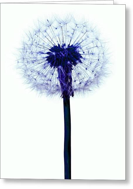 Dandelion Seed Head Greeting Card by Victor De Schwanberg