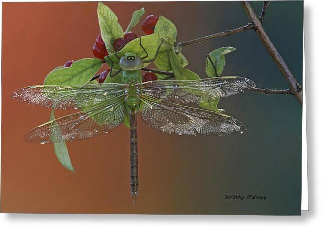 Darner On Berries Greeting Card