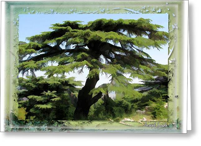 Do-00512 Cedar Forest Greeting Card