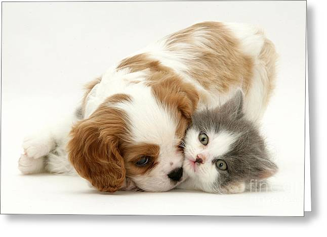 Dog And Cat Greeting Card by Jane Burton