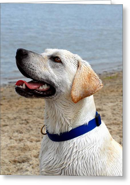 Dogs 104 Greeting Card by Joyce StJames