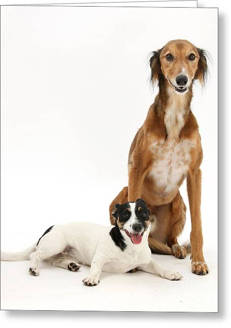 Dogs Greeting Card by Mark Taylor