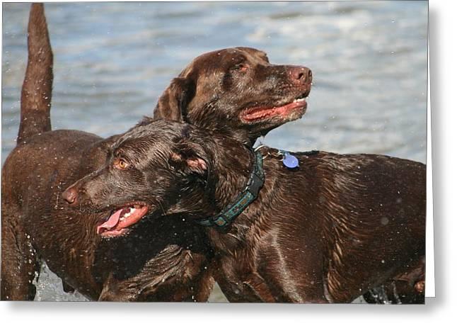 Dogs On The Beach Greeting Card by Valia Bradshaw