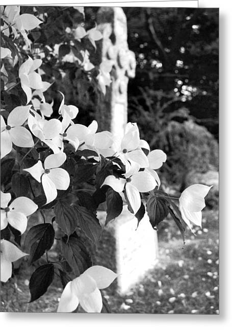 Dogwood In Cemetery Greeting Card by Julie VanDore
