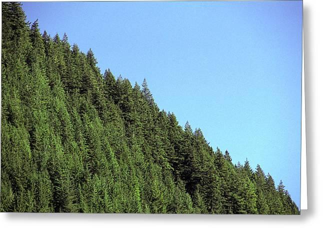 Douglas Fir Forest, British Columbia, Canada Greeting Card by Kaj R. Svensson