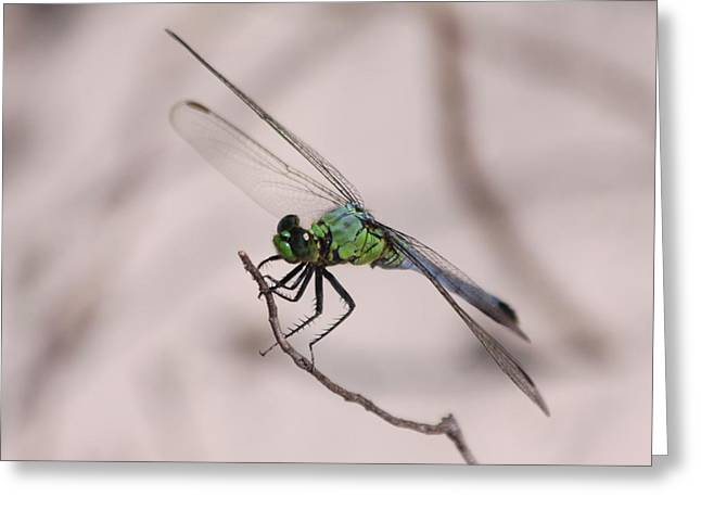 Dragon Fly Greeting Card by Jeanne Andrews