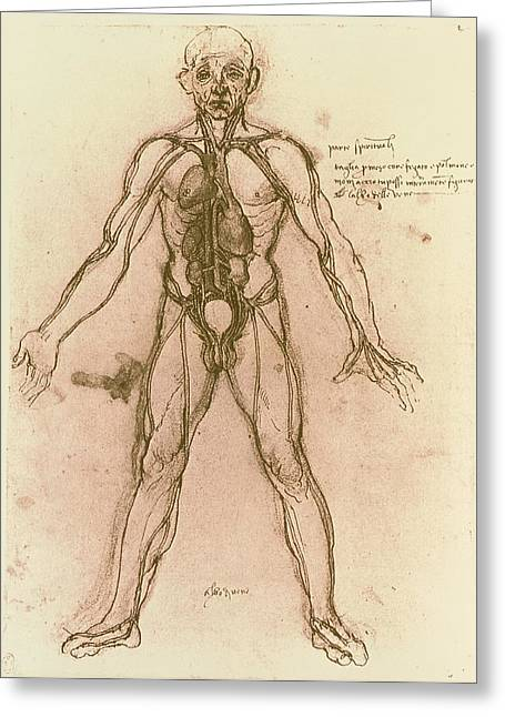 Drawing Of Human Venous System (leonardo Da Vinci) Greeting Card by Mehau Kulyk