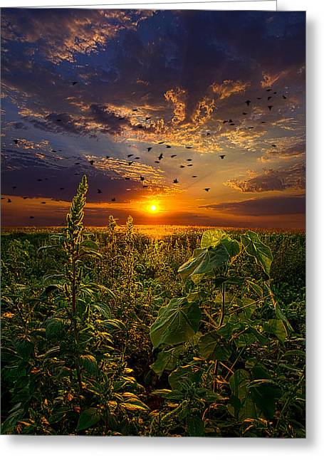 Early Bird Special Greeting Card by Phil Koch