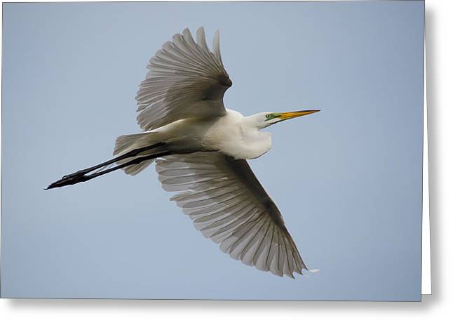 Egret Greeting Card