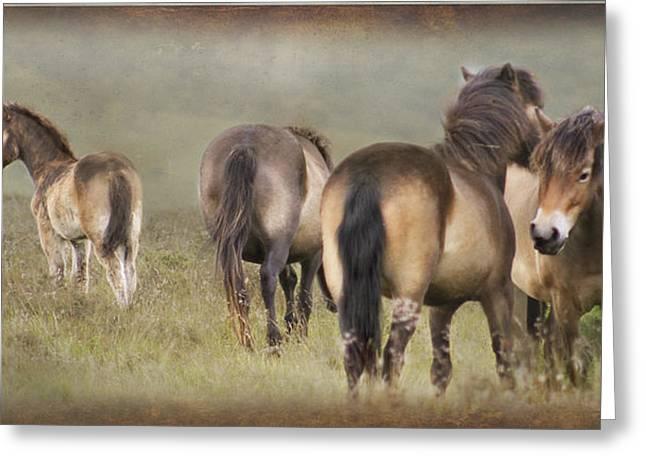 Exmoor Ponies Greeting Card