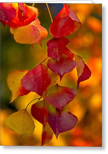 Greeting Card featuring the photograph Fall Color 1 by Dan Wells