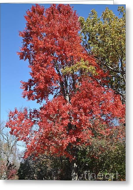 Fall Colors Greeting Card by Denise Ellis