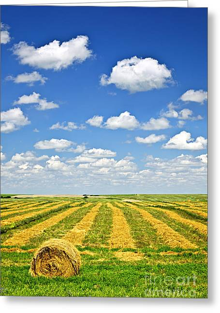 Farm Field At Harvest In Saskatchewan Greeting Card