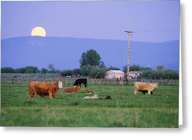 Farm Scene West Of Chiloguin, Oregon Greeting Card by Phil Schermeister