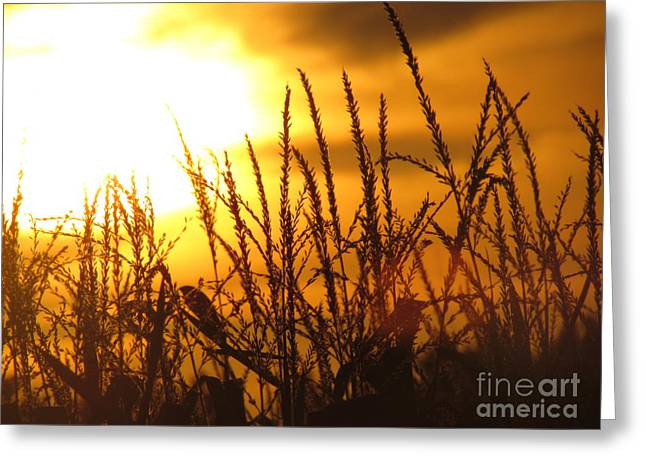 Greeting Card featuring the photograph Farming Sunset by France Laliberte