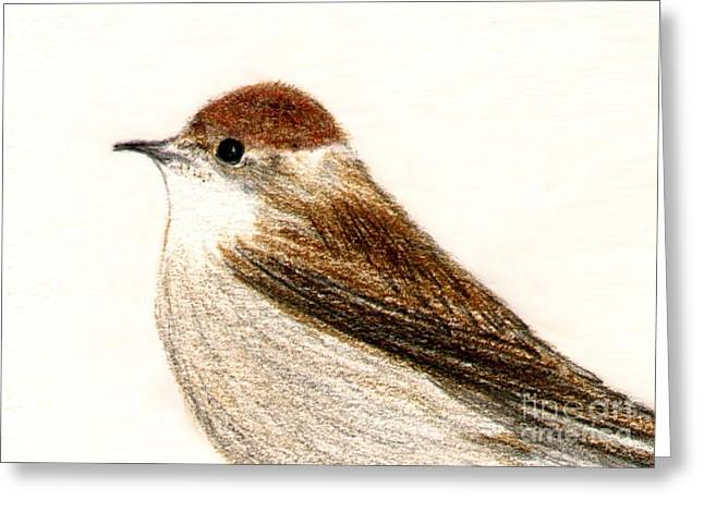Greeting Card featuring the drawing Female Blackcap  by Barbara Moignard