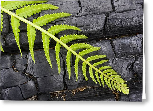 Fern On Burnt Log Greeting Card