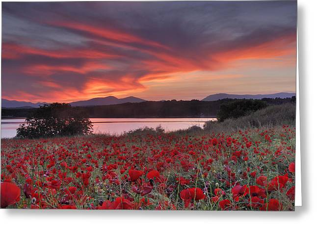 Field Of Poppies Greeting Card by Guido Montanes Castillo