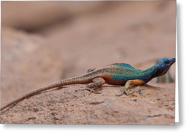 Flat Lizard Greeting Card by Hein Welman