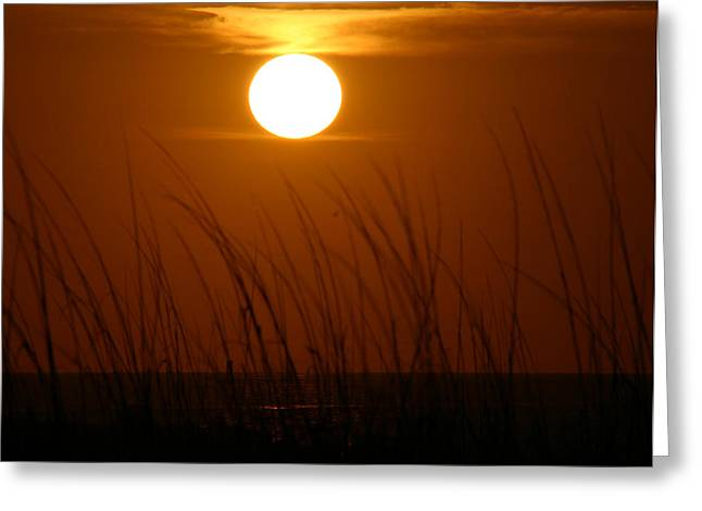 Greeting Card featuring the photograph Florida Sunrise by Jeanne Andrews
