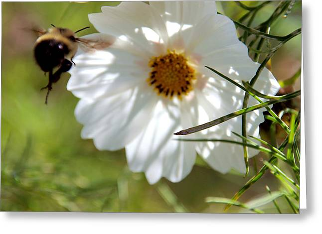 Flower And Bee Greeting Card by Christy Woods