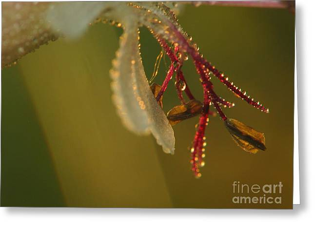 Flower And Drops Greeting Card by Odon Czintos