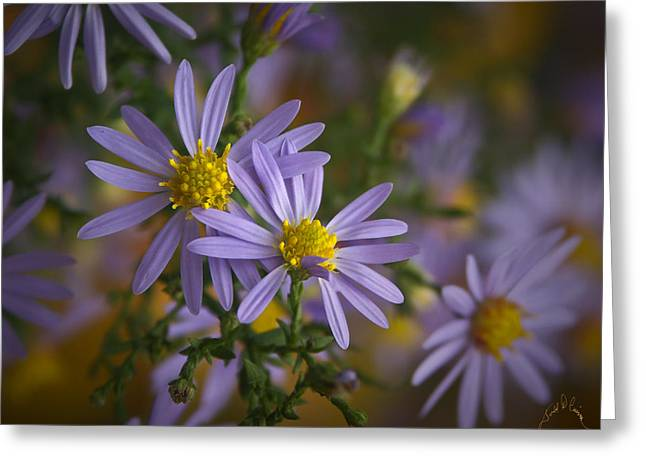 Flowers On Blue Ridge Parkway Greeting Card by Williams-Cairns Photography LLC