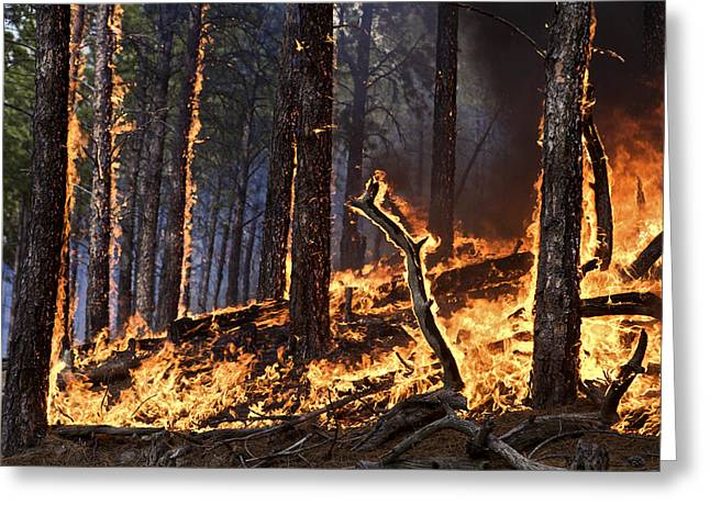 Forest Fire Caused By Lightning Greeting Card