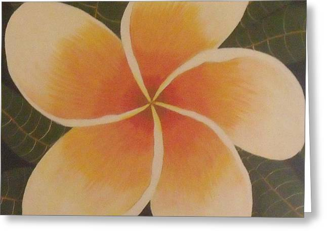 Frangipani Greeting Card by Debra Piro