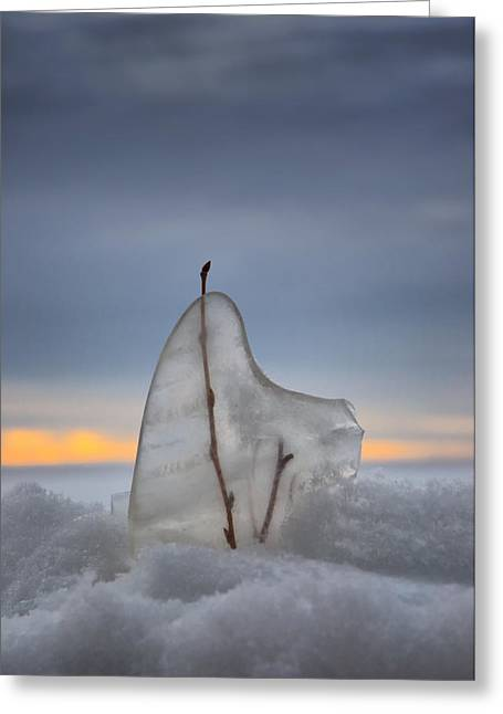 Frozen In Time Greeting Card by Heather  Rivet