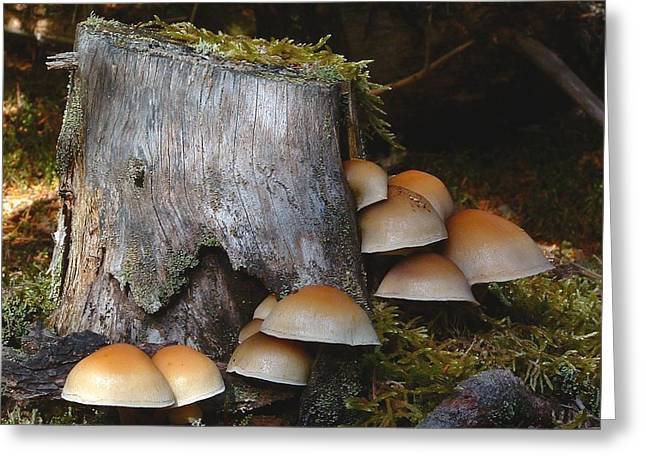 Fungus Unamed Greeting Card