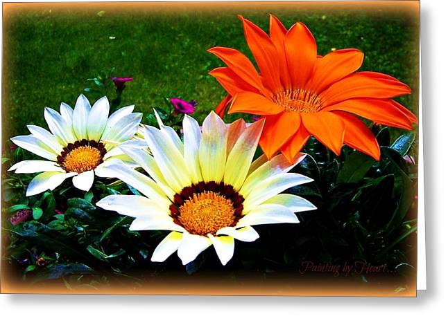 Garden Daisies Greeting Card