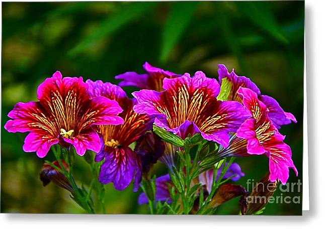Gleaming In Purple And Gold Greeting Card by Byron Varvarigos