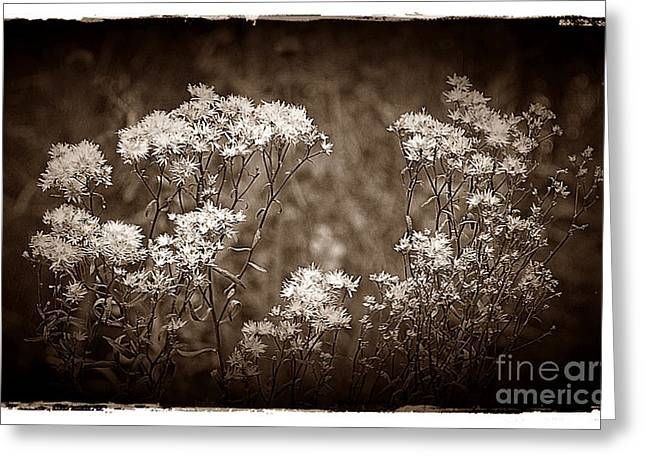 Going To Seed Greeting Card by Judi Bagwell