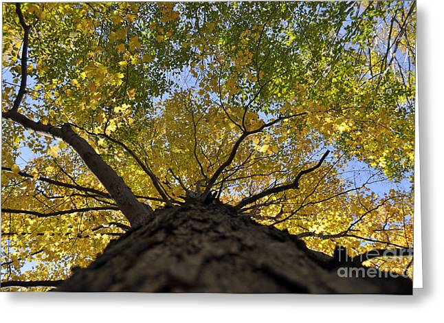 Going Up Fall Greeting Card