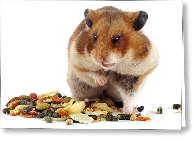 Golden Hamster Greeting Card by Jane Burton