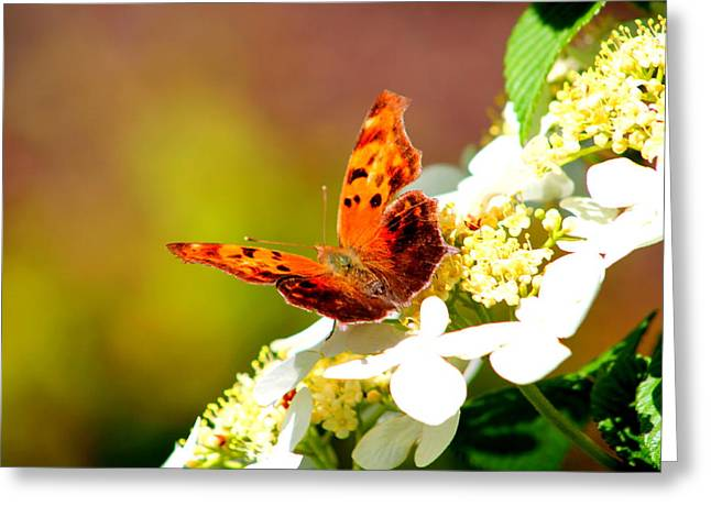 Graceful Butterfly Greeting Card by Jose Lopez