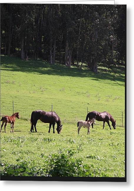 Greeting Card featuring the photograph Grace's Horses by Cynthia Marcopulos