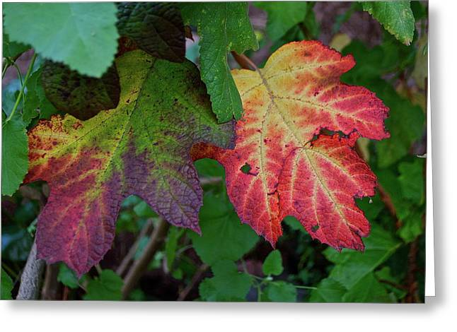 Grape Leaves Greeting Card by Lori Leigh