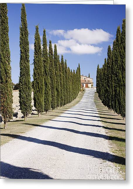 Gravel Road Lined With Cypress Trees Greeting Card