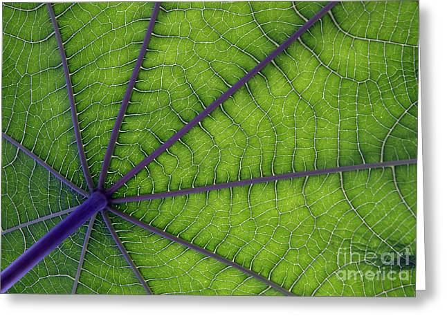Green Leaf Greeting Card by Urban Shooters