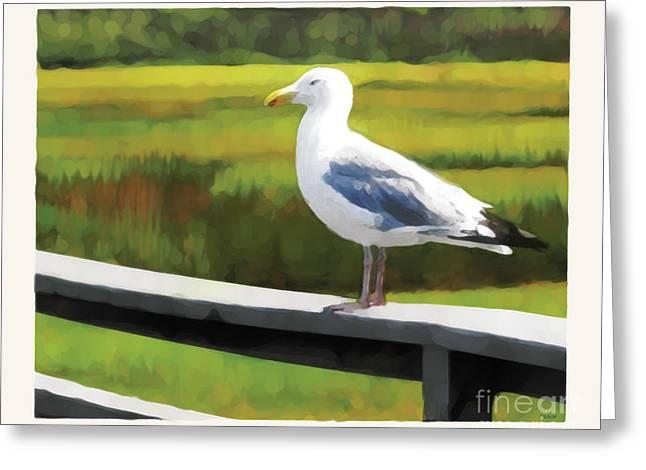 Gull One Greeting Card by David Klaboe